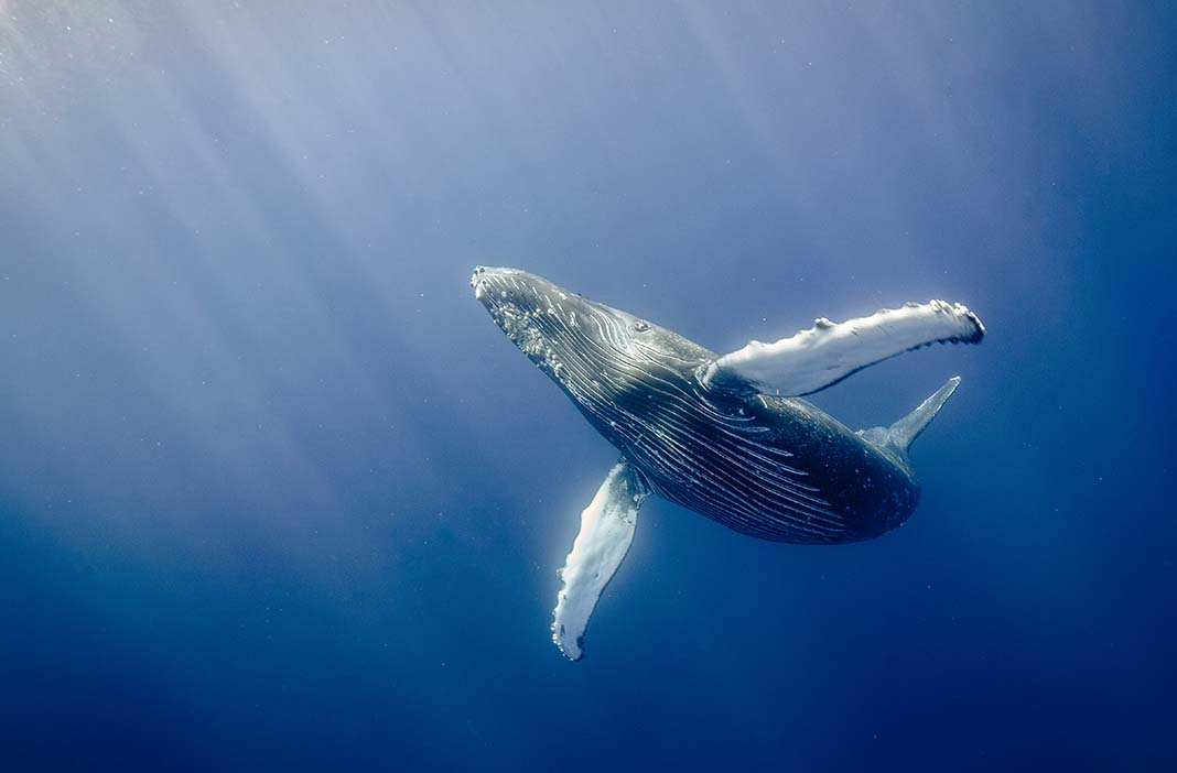 Whale watching tour to do in Puerto Vallarta